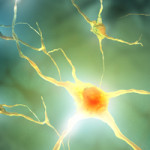 Photo: Illustration of a nerve cell